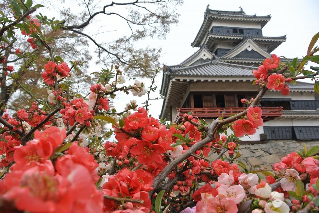 梅と松本城