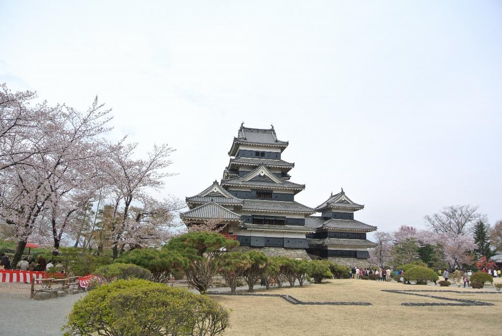 桜と松本城1