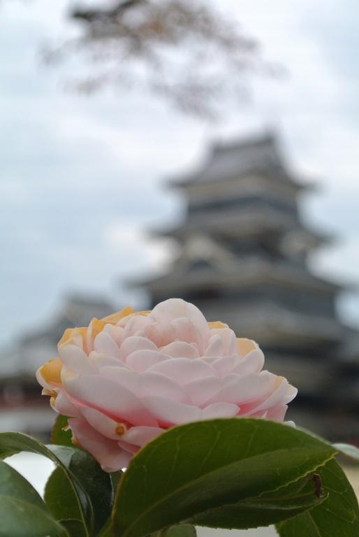 花と松本城